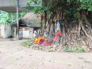 The nail stricken Pala tree